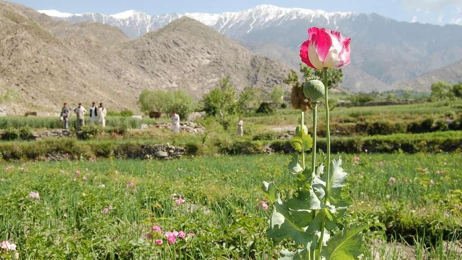 Afghanistan: Rosen als Alternative - Welthungerhilfe